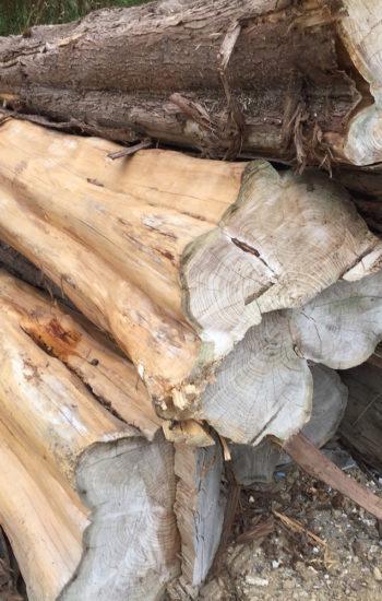 Chutes de troncs d'extension bois